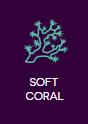 puha korallok